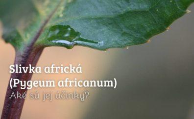 Slivka africká